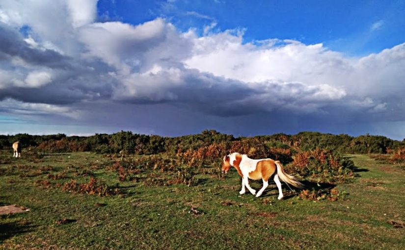 New Forest – Burley