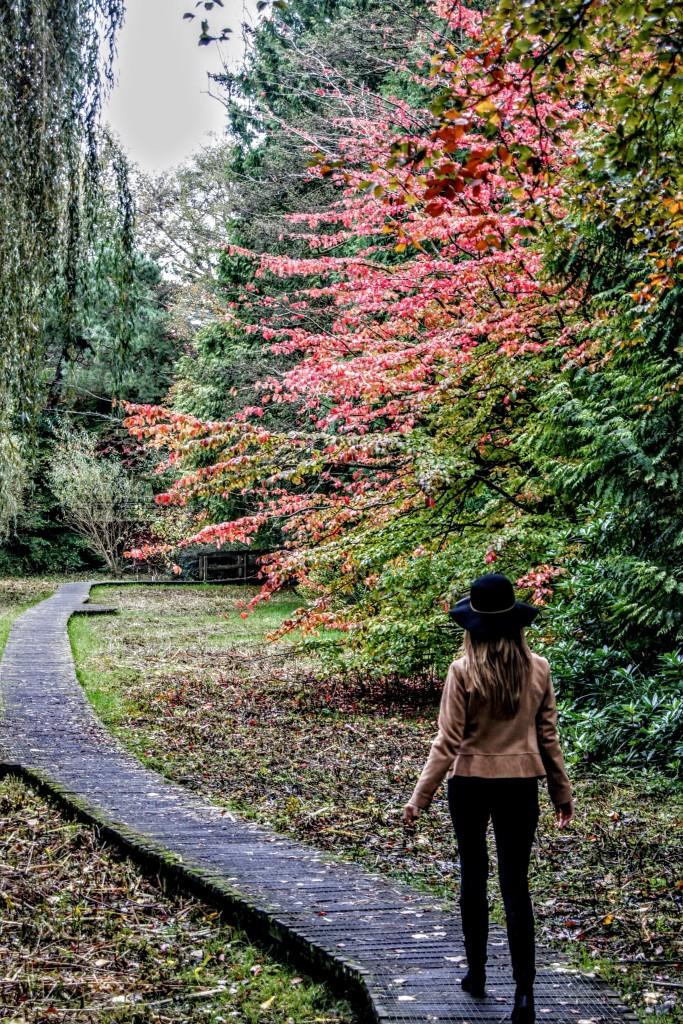 Upper Gardens, Autumn 2019